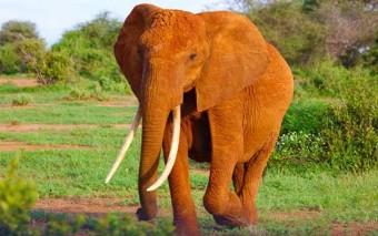¿Dios es un elefante? Desmontando el argumento de la equivalencia de las religiones