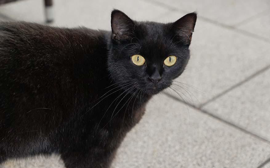 cat-979019_1280