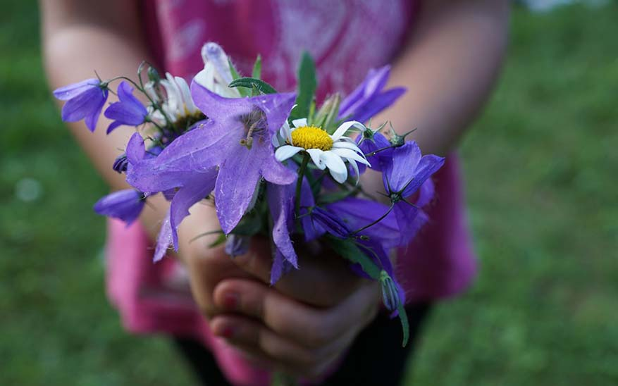 flowers-871514_960_720