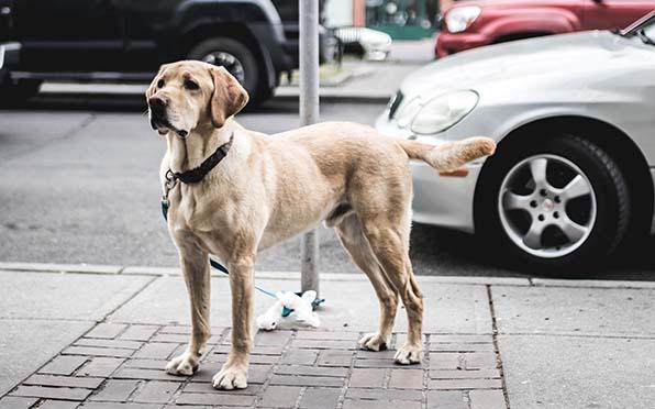 Perritos, ¿Qué va a pasar con nuestros perritos después de la muerte? @Padre_Seba