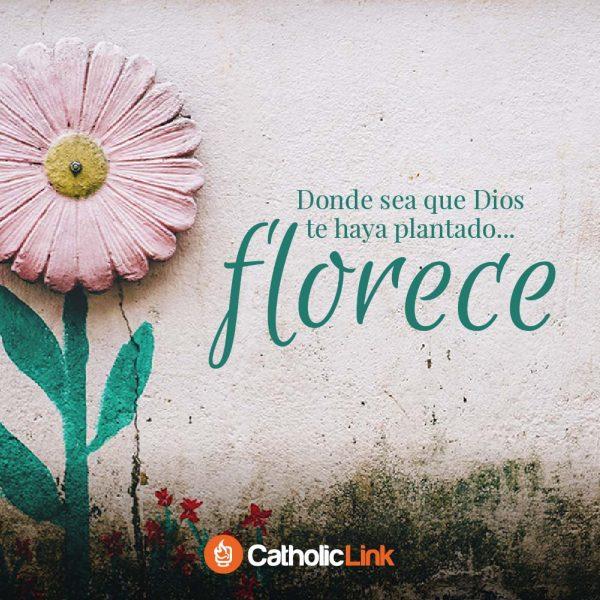 Donde sea que Dios te haya plantado, florece