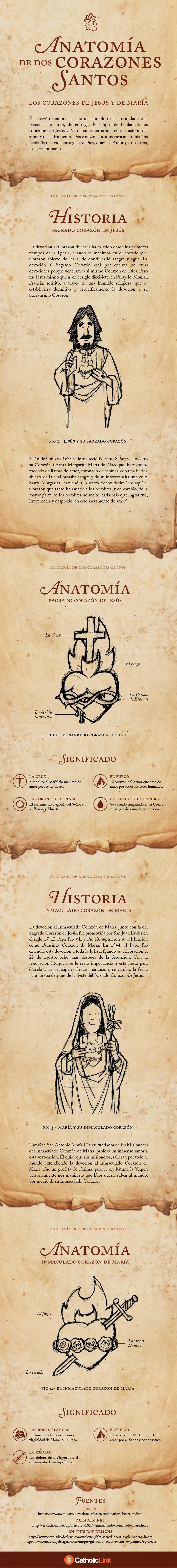 Infografía) La anatomía de dos corazones santos.