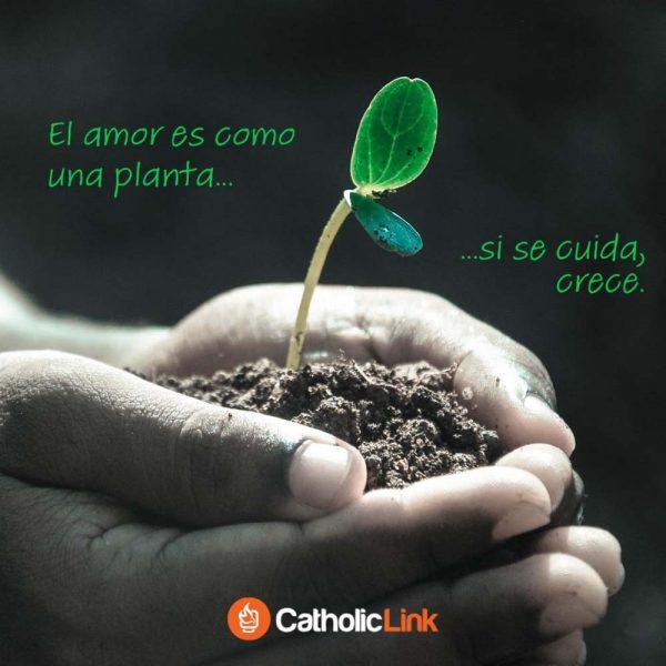 El amor es como una planta: si se cuida, crece