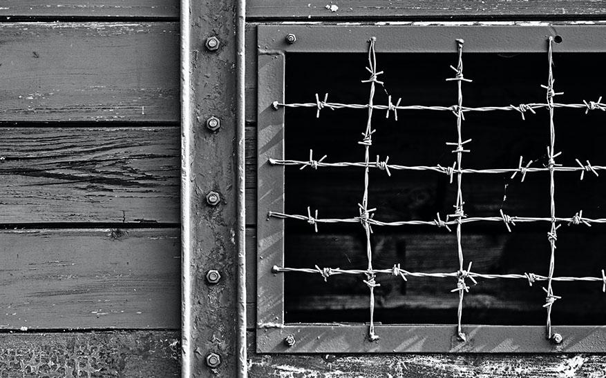 «La bailarina de Auschwitz»: razones para leer el libro